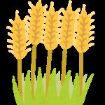 穀物不使用(グレインフリー)
