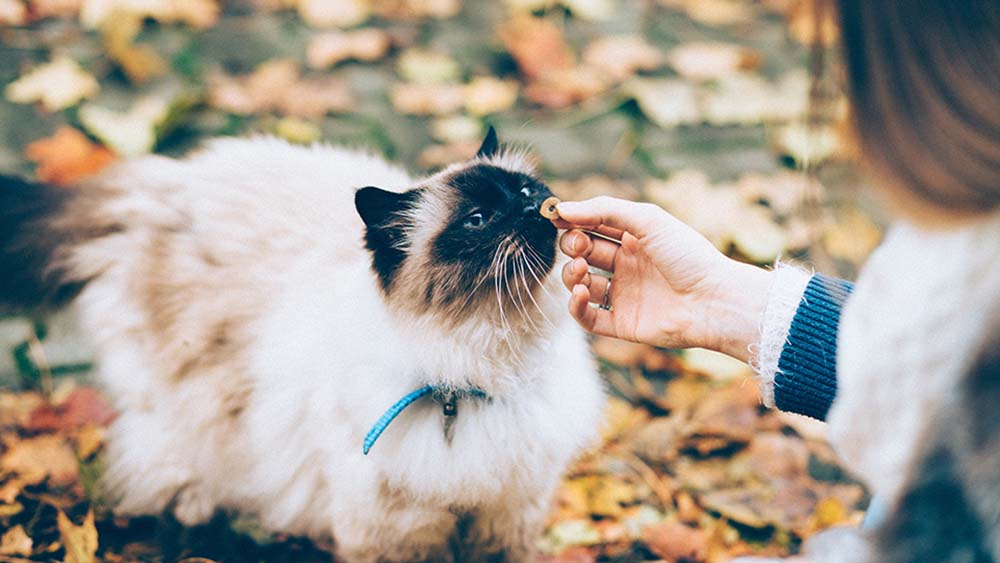 猫にタンパク質は超重要!必要な摂取量とキャットフードの選び方