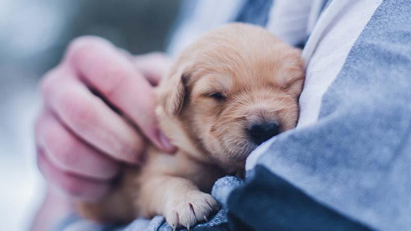 子犬の食事量は何g?犬種と月齢から正しい量を徹底確認!