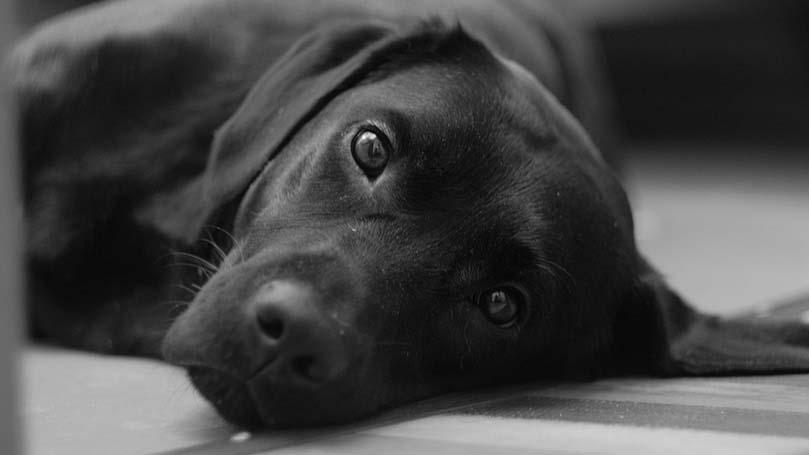犬が下痢になる原因ベスト3!今すぐにできる対処法とは?