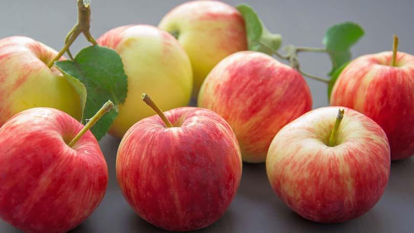 犬にりんごジュースは理想的な栄養!健康につながる5つ効果と注意点