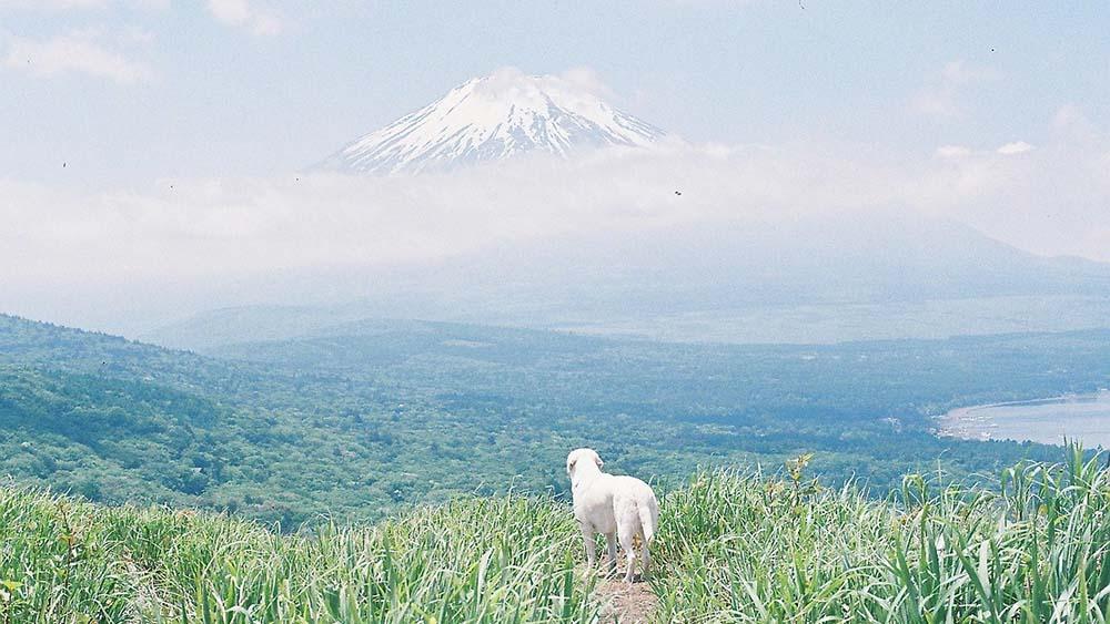 ノスタルジックな美しい世界観とワンちゃんがマッチしたフォトグラファー「azusa_photo_」