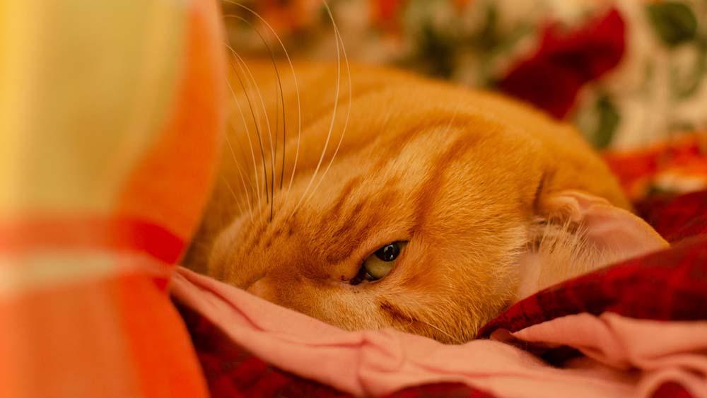 見てるとなんだか眠くなってしまう茶トラ猫の写真「ぼくわちくわ」