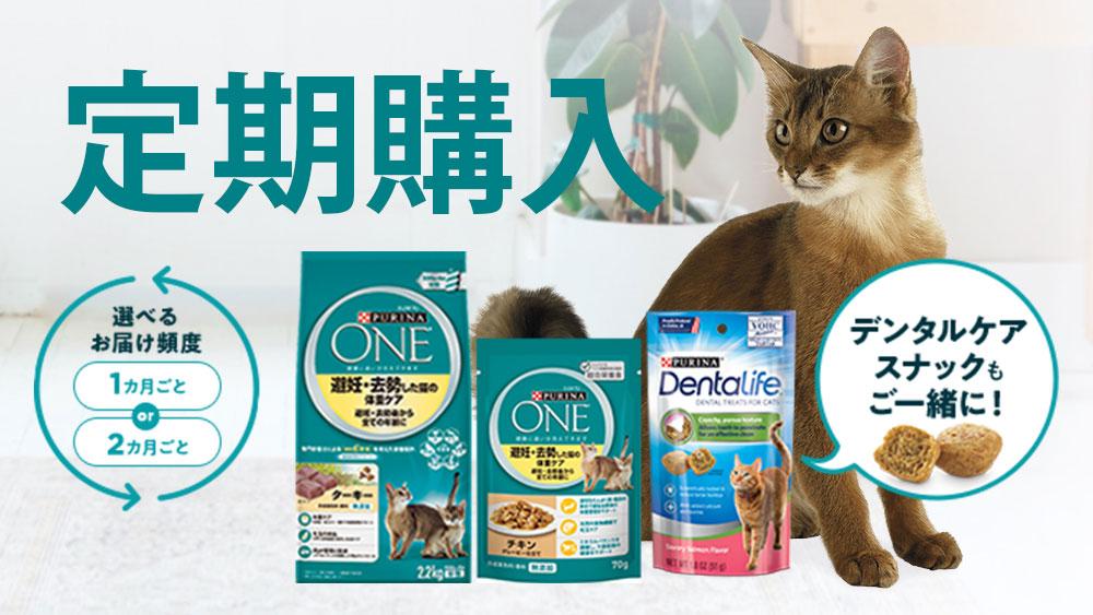 猫用ピュリナワンのお得な新しいキャンペーン!お得に買うためには定期購入を活用しよう