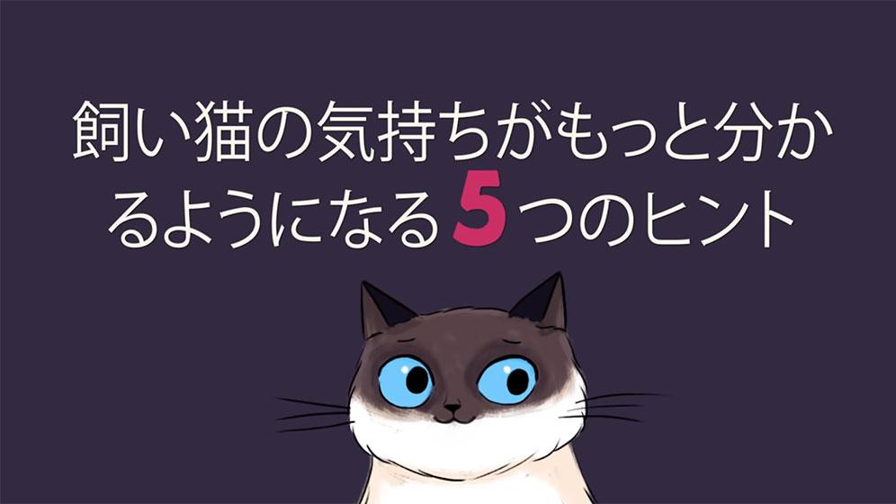猫と気持ちよくコミュニケーションをとるためのヒント
