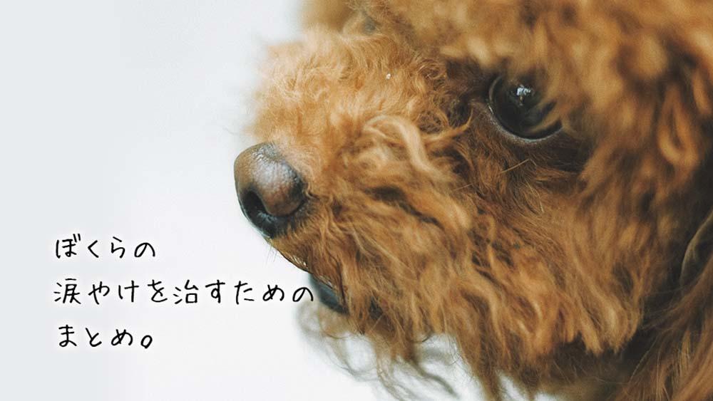 【完全版】犬の涙やけの原因から対策まとめ!効果が高いドッグフード・サプリ5選