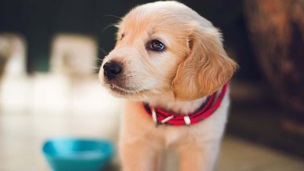 犬の餌は1ヶ月にいくらかかる?ドッグフードの費用を徹底調査!