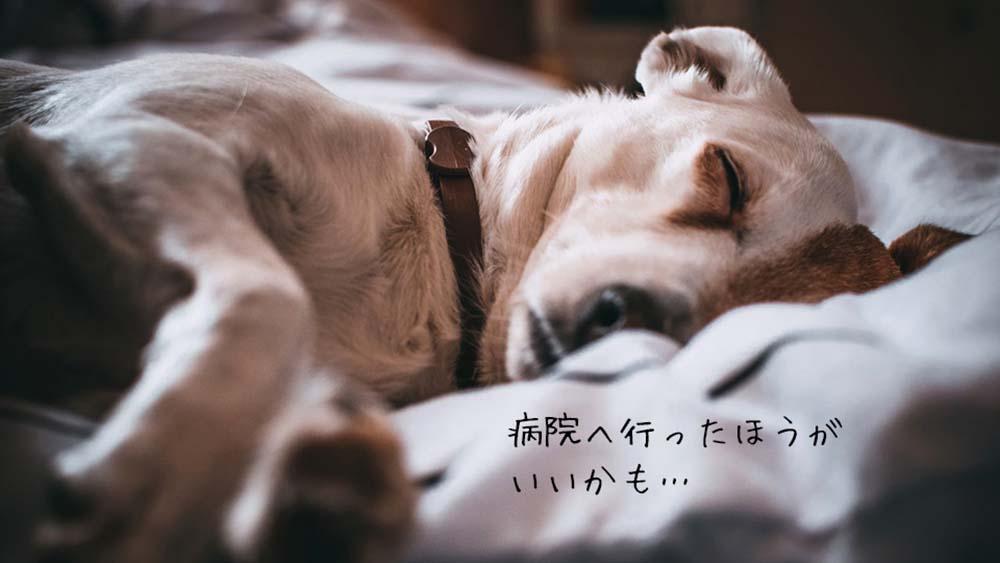 犬が下痢と嘔吐を同時にしたら病院に行くべき?原因と見分け方まとめ!