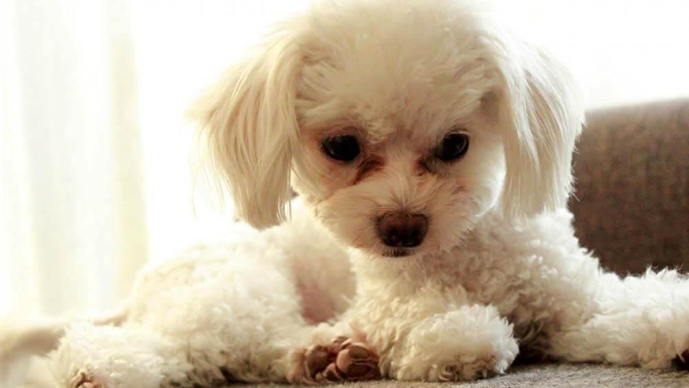 【衝撃事実】犬の「目やに」は病気の疑いが濃厚!原因と対処方法まとめ