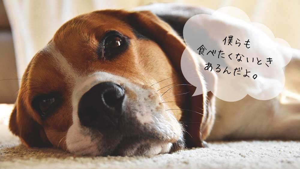 犬がご飯を食べない4つの理由!対処法と食いつきよくする工夫とは?
