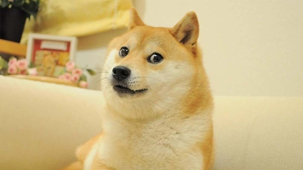 海外で大人気になった柴犬「かぼすちゃん」の魅力とは