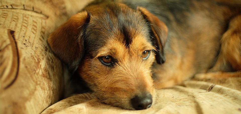 【まとめ】愛犬のアレルギーに合わせたドッグフードを意識して選ぶこと