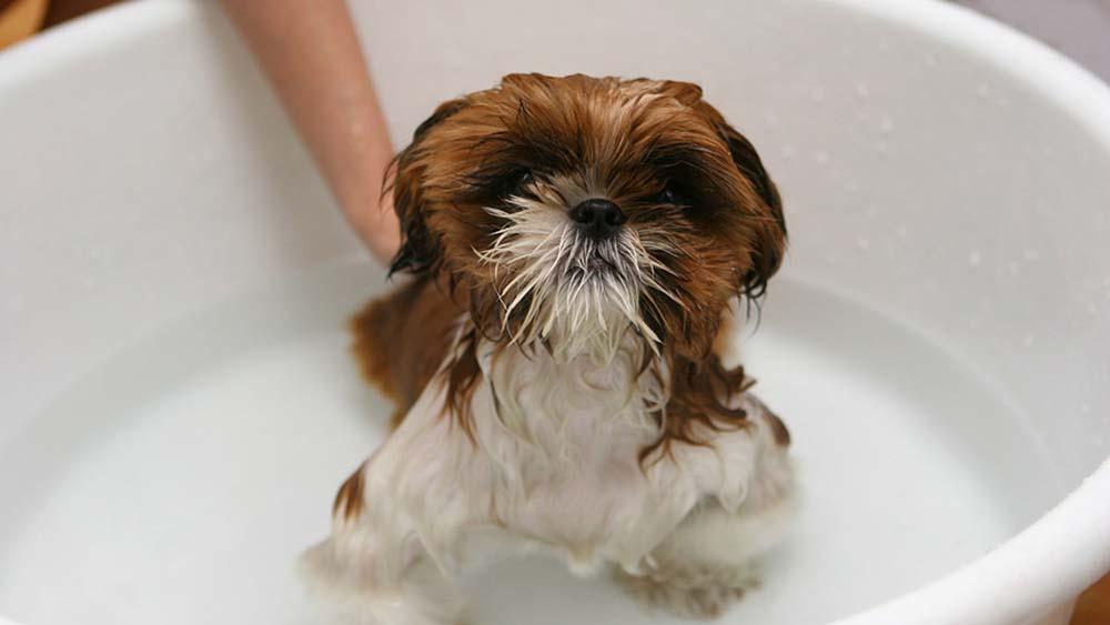 犬の涙やけ予防には清潔が大切