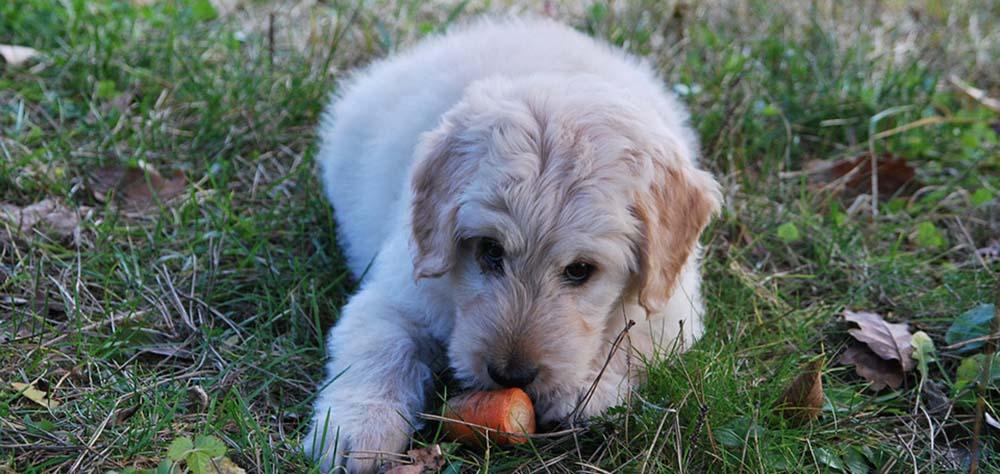 犬が下痢と嘔吐を同時に起こしている原因