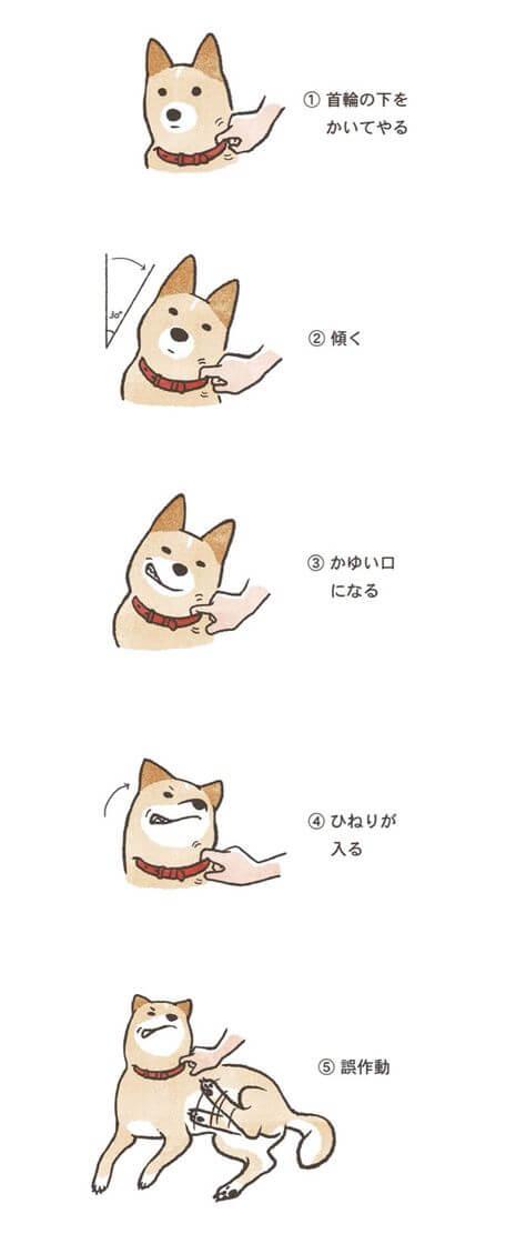 誤作動柴犬