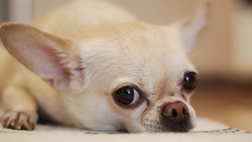 【愛犬が原因】ドッグフードを食べない理由と解決方法
