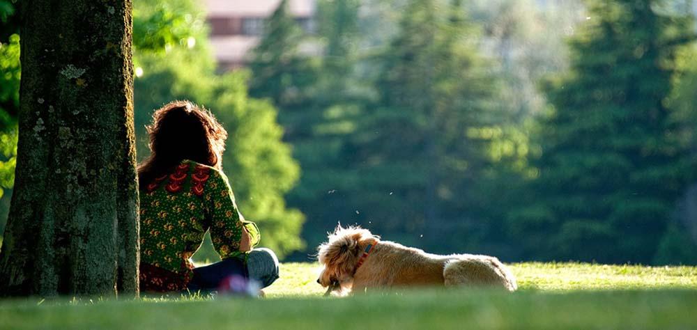 愛犬の健康が目的なら、シンプルに考えるべきたった1つのこと