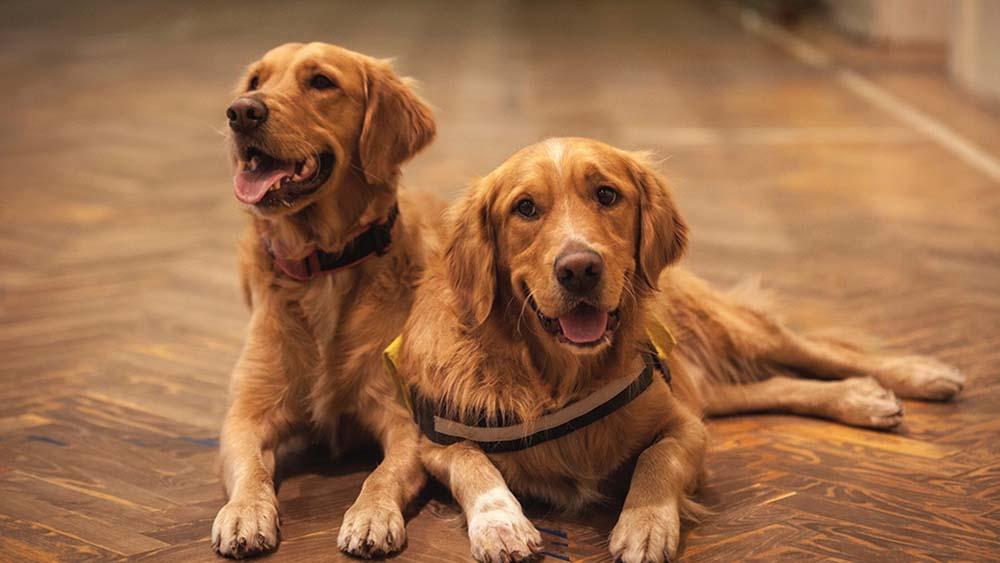 大型犬と小型犬の餌代の差は?