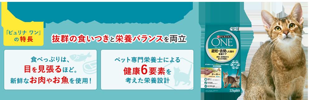 定期お届け便の限定キャンペーン!お得な特典満載!
