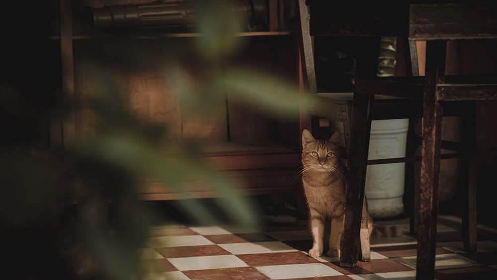 猫がカナガンキャットフードを食べない5つの理由