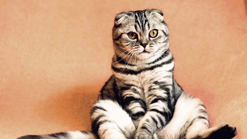 モグニャンキャットフードをおすすめできる猫・できない猫は?