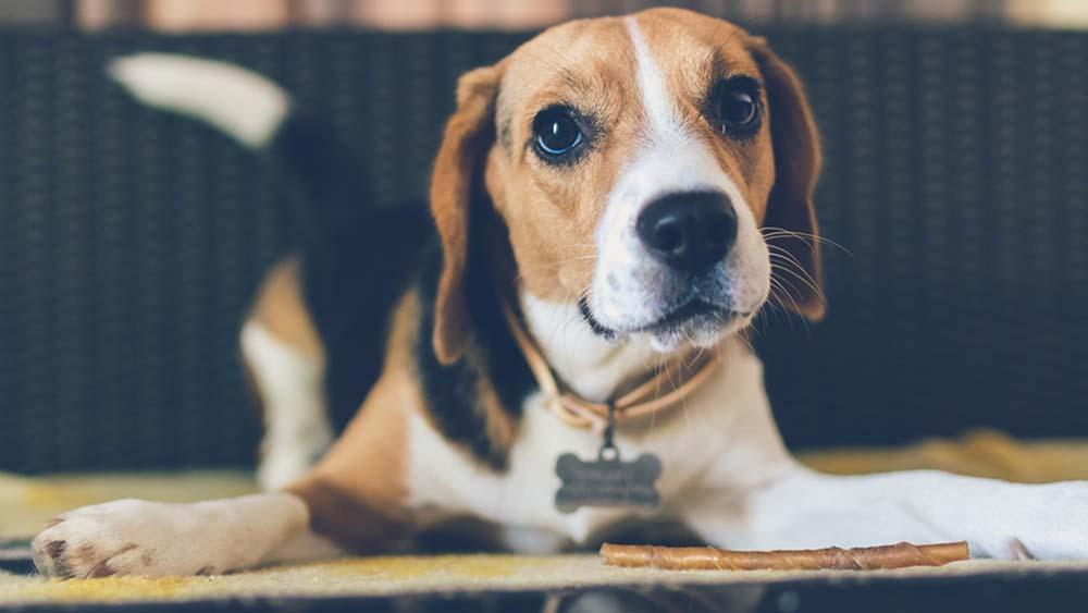 【まとめ】愛犬がドッグフードを食べないときは、食生活を工夫してあげる