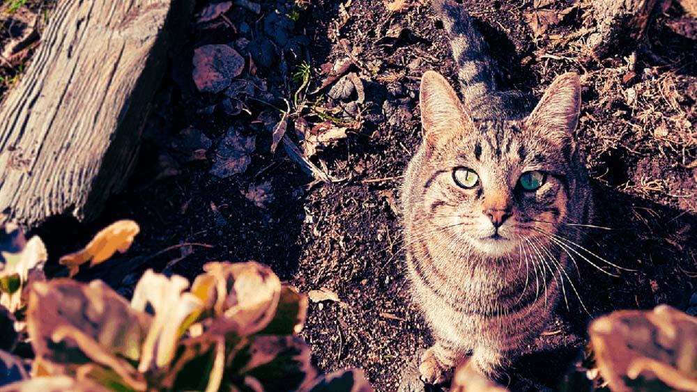 【まとめ】猫の餌は原産国ではなく原材料や成分を確認して選ぶこと