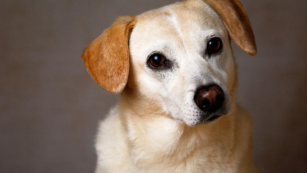 愛犬が食べてはいけないドッグフードを確認するには