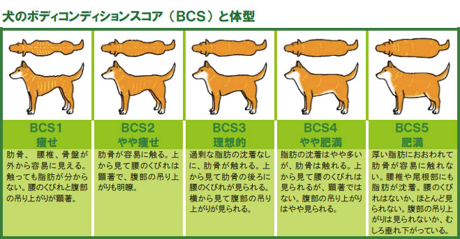 犬のボディコンディションスコア(BCS)と体型
