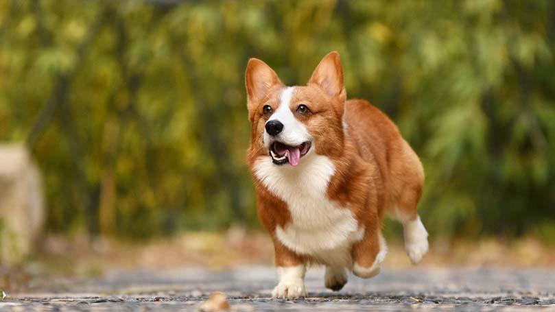【まとめ】りんごジュースは犬にとっても健康的な栄養に!
