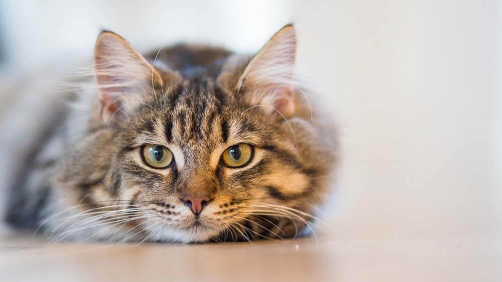 【まとめ】愛猫がカナガンキャットフードを食べないのは理由がある