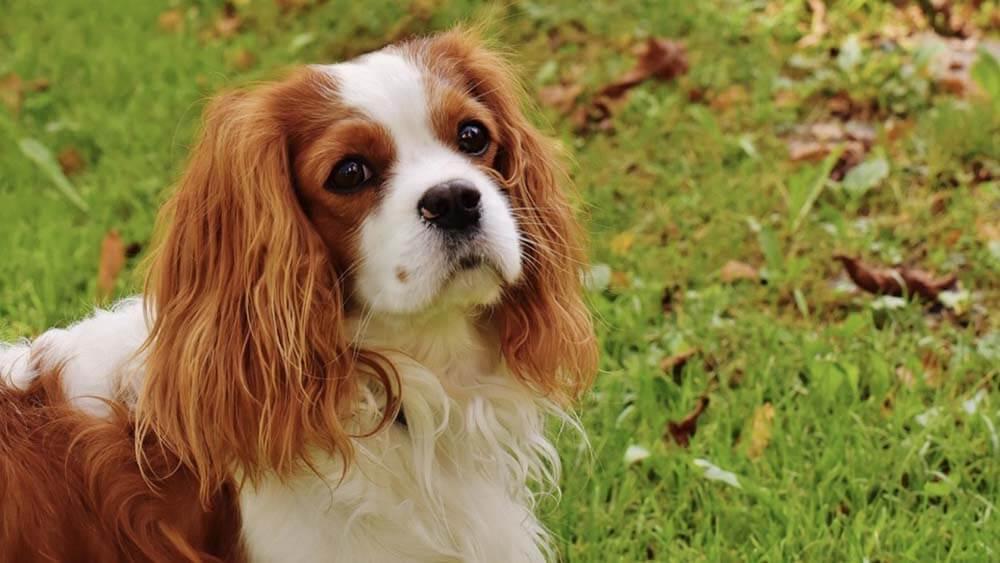 【まとめ】愛犬元気の評価まとめ