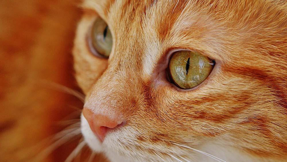 猫の健康のため!安全なキャットフードを選んでください