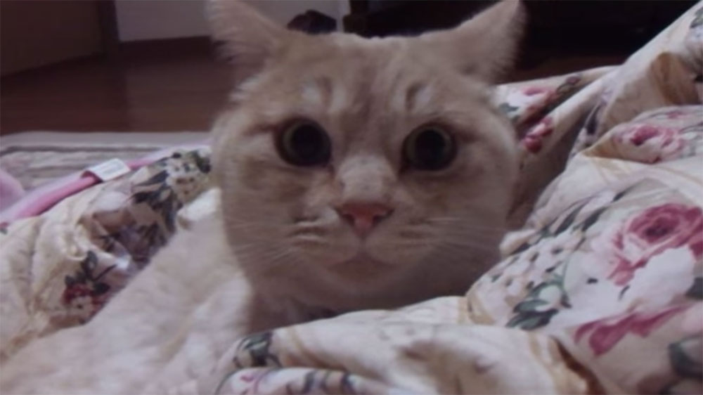 猫の真似が得意な人が、猫語で喧嘩うってみたら大変なことになった