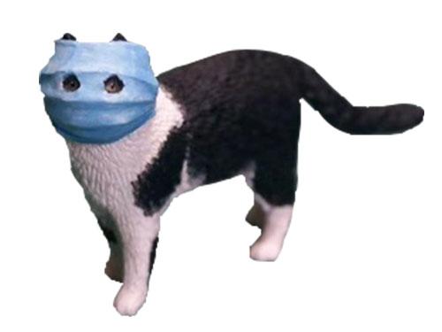 武漢のマスク猫