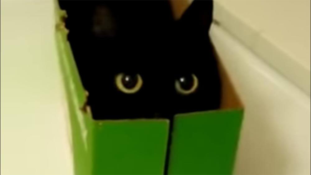 君は猫なのか?とても可愛いロシアのクロネコヤマトの宅急便