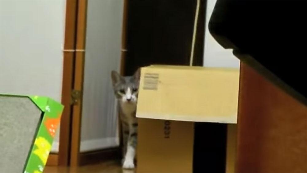 捕食される感覚と可愛さを味わえる、だるまさんが転んにゃの猫モアレちゃん
